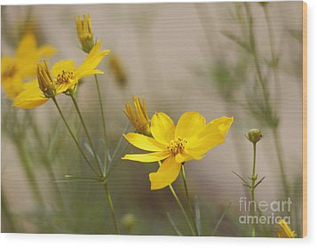 Wood Print featuring the photograph Coreopsis by Trina  Ansel