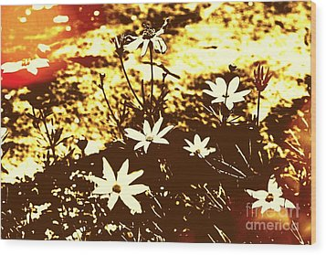 Wood Print featuring the photograph Coriopsis by Denise Tomasura