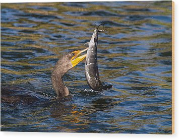 Cormorant And Its Meal Wood Print by Andres Leon