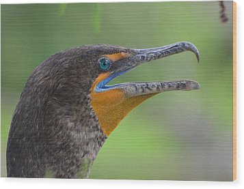 Cormorant Close Up Wood Print by Jodi Terracina