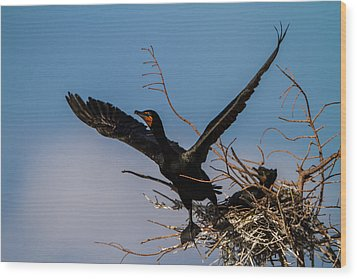 Cormorant Parent Flying Out Wood Print by Andres Leon