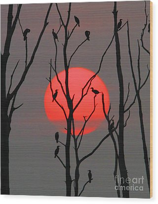 Cormorants At Sunrise Wood Print by Roger Becker