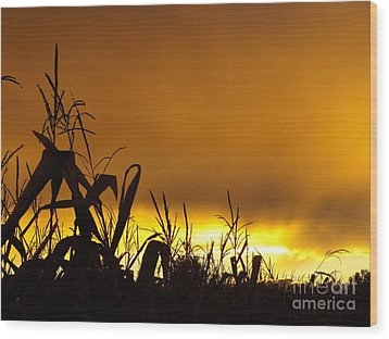 Corn At Sunset Wood Print