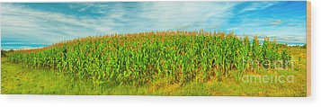 Corn Crop Wood Print by MotHaiBaPhoto Prints