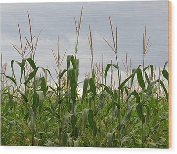 Wood Print featuring the photograph Corn Field by Laurel Powell