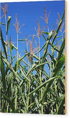 Corn Field Rural America Wood Print by Heather Allen