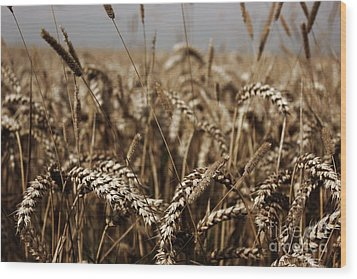 Wood Print featuring the photograph Corn Field by Vicki Spindler