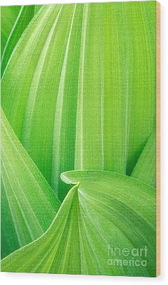 Wood Print featuring the photograph Corn Lily Leaf Detail Yosemite Np California by Dave Welling