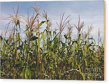 Corn Production Wood Print by Carlos Caetano