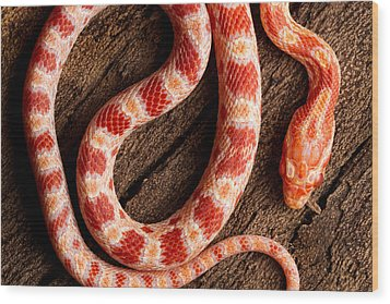 Wood Print featuring the photograph Corn Snake P. Guttatus On Tree Bark by David Kenny