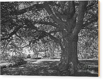 Cornell College Landscape Wood Print by University Icons