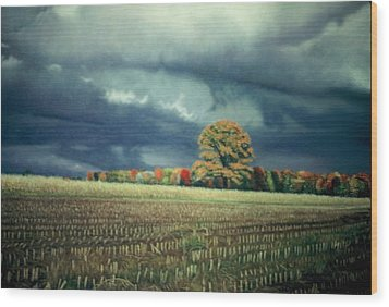 Cornfield On Argentine Road Wood Print by James Welch