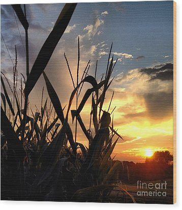 Cornfield Sundown Wood Print