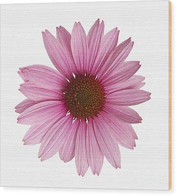 Cornflower Wood Print by Tony Cordoza