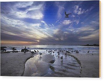 Corona Del Mar Wood Print by Sean Foster