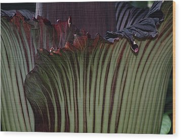 Wood Print featuring the photograph Corpse Flower Detail 1 by Sheila Byers