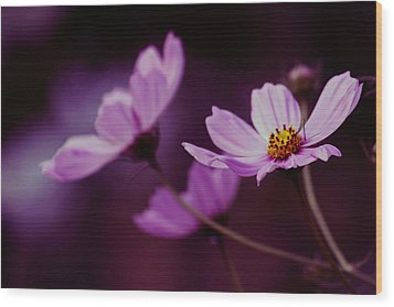 Wood Print featuring the photograph Cosmo After Glow by Kay Novy