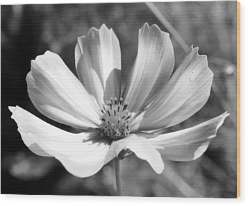 Cosmos Bw1 Wood Print by Gerry Bates