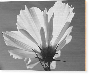 Cosmos Bw2 Wood Print by Gerry Bates