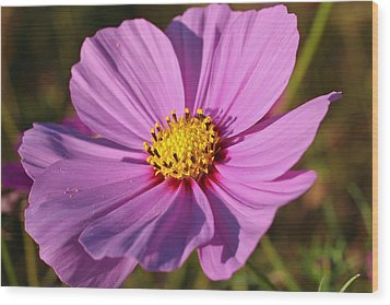 Wood Print featuring the photograph Cosmos Love by Julie Andel