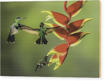 Costa Rican Hummingbirds Wood Print by Myer Bornstein