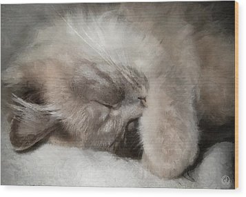 Cosy Nap Wood Print by Gun Legler