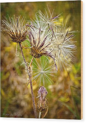 Wood Print featuring the photograph Cotten Grass by Jim Thompson