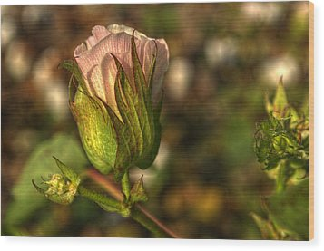 Cotton Bloom Wood Print by Kelly Kitchens