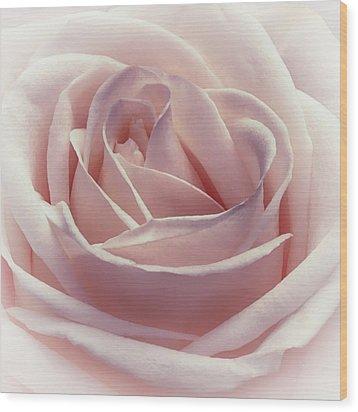 Cotton Candy Kisses Wood Print by Darlene Kwiatkowski