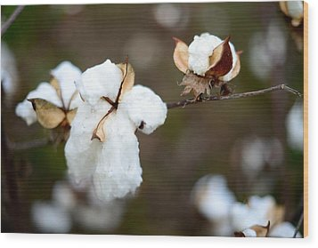 Wood Print featuring the photograph Cotton Creations by Linda Mishler
