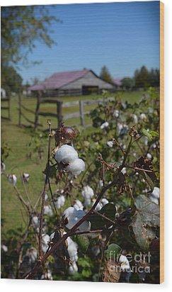 Cotton Farm Wood Print
