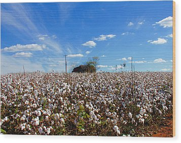 Wood Print featuring the photograph Cotton Field Under Cotton Clouds by Andy Lawless