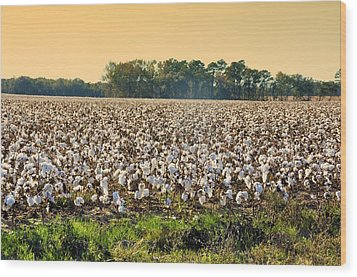 Cotton Fields Back Home Wood Print by Jan Amiss Photography