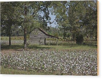 Cotton In Rural Alabama Wood Print