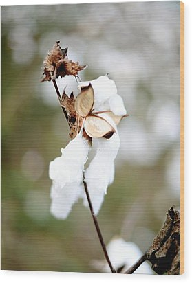 Wood Print featuring the photograph Cotton Picking by Linda Mishler
