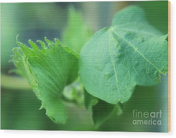 Cotton Plant Wood Print by Charline Xia