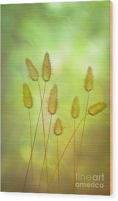 Cottontails Wood Print by Jan Bickerton