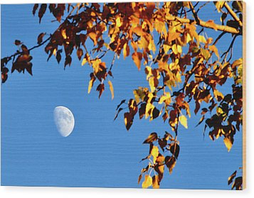 Cottonwood Moon Wood Print by Jan Davies