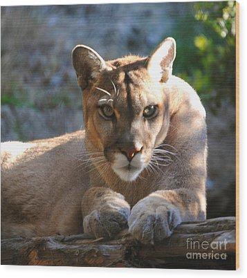 Cougar II Wood Print by DiDi Higginbotham