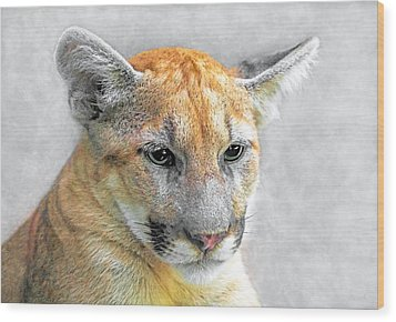 Wood Print featuring the photograph Cougar by Marion Johnson