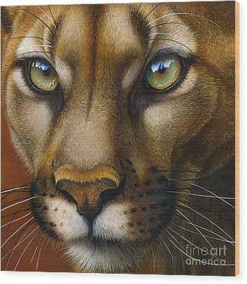 Cougar October 2011 Wood Print by Jurek Zamoyski