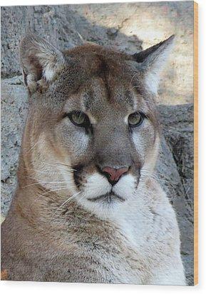 Cougar Wood Print by Ramona Johnston