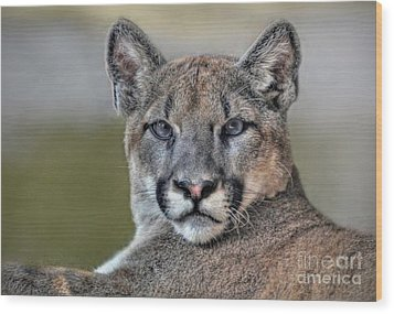 Wood Print featuring the photograph Cougar  by Savannah Gibbs