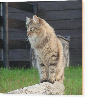 Wood Print featuring the photograph Cougar The Barn Cat 2 by Barbie Batson