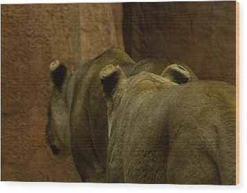 Cougars Walking Away Wood Print by Lindy Spencer