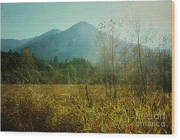 Wood Print featuring the photograph Country Drive by Sylvia Cook