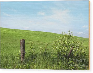 Country Fence With Flowers With Blue Sky Wood Print by Sandra Cunningham