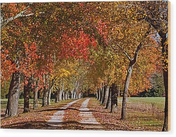 Wood Print featuring the photograph Country Lane In Autumn by Jerry Gammon