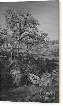 Country Road Wood Print by Dan Julien
