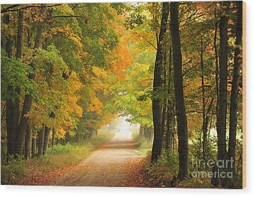 Country Road In Autumn Wood Print by Terri Gostola
